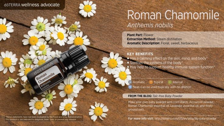 wa-roman-chamomile
